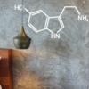 Serotonin das Glückshormon